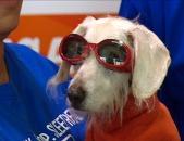 'Chanel' anjing tertua di dunia